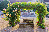Chateau DU Rivau, Loire Valley, FRANCE: ROSE ARBOUR at DAWN IN THE CENTRAL COURTYARD PLANTED with DAVID AUSTIN ROSE - ROSE 'Crown Princess Margareta'