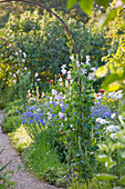 Peckover HOUSE, Wisbech, CAMBRIDGESHIRE: THE NATIONAL TRUST - Sweet PEA ARCH IN THE CUT FLOWER Garden