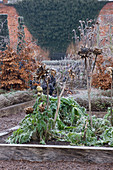 HAMPTON Court Castle AND GARDENS, Herefordshire: THE Organic KITCHEN / VEGETABLE Garden - RAISED BEDS with CARDOONS IN Frost