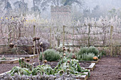 HAMPTON Court Castle AND GARDENS, Herefordshire: THE Organic KITCHEN / VEGETABLE Garden IN Frost with RAISED BEDS PLANTED with CARDOONS