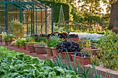 RHS Garden, WISLEY, Surrey: THE VEGETABLE Garden IN JUNE with HERBS IN CONTAINERS