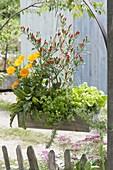 Kasten mit essbaren Pflanzen als Naschampel