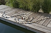 Spirale aus Kieselsteinen gelegt auf Holzsteg am Schwimmteich