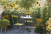 Gelber Spaetsommerbalkon mit Helianthus annuus (Sonnenblumen)