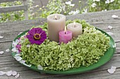 Kranz aus Hydrangea (Hortensien) mit einer Blüte von Zinnia (Zinnie)