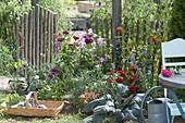 Beet mit einjaehrigen Sommerblumen anlegen