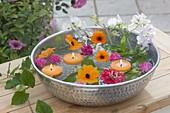 Silberne Schale mit Blüten von Thunbergia alata (Schwarzäugiger Susanne)