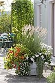Holzkasten herbstlich bepflanzt : Pennisetum 'Hameln' (Federborstengras),