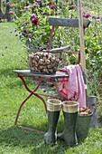 Pflanzzeit für Blumenzwiebeln : Narcissus (Narzissen-Zwiebeln)