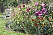 Buntes Beet mit Sommerblumen und Stauden
