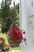 Selbstgemachter Ampelkorb in Eiform mit Pelargonium zonale