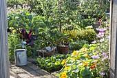 Bauerngarten im Spätsommer mit Obst, Gemüse und Sommerblumen
