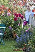 Frühherbst im kleinen Garten : Dahlia (Dahlien), Rhus typhina (Essigbaum)