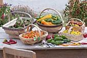 Körbe mit frisch geernteten Paprika, Peperoni und Chili (Capsicum)