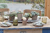 Tischdeko mit Sukkulenten im Wintergarten