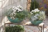 Türkise Schalen grau - weiss bepflanzt