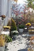 Herbstterrasse mit Miscanthus (Chinaschilf), Chrysanthemum