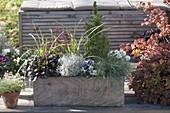 Selbstgebauter Holzkasten herbstlich bepflanzt : Festuca cinerea 'Azurit'