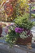 Herbstlich bepflanzter Korb : Picea abies (Rotfichte), Calluna Twin-Girls