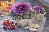 Violetter Zierkohl (Brassica) in konischen Toepfen, Kranz aus Lavendel