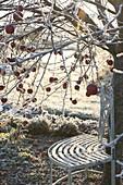 Winterlicher Garten mit Bank unter Apfelbaum (Malus)