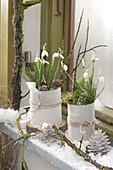 Galanthus nivalis (Schneeglöckchen) im Schnee vorm Fenster