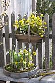 Vorfrühling am Gartenzaun
