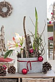 Weihnachtliches Gesteck mit Amaryllis im grauen Kasten