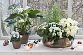 weiße Zimmerpflanzen in Kupfer-Gefaessen am Fenster
