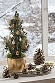 Picea glauca 'Conica' (Zuckerhutfichte) weihnachtlich geschmückt