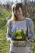 Frau mit Birken-Kästchen mit Primula acaulis, elatior (Primeln)