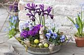 Zink - Schüssel mit Iris reticulata (Netziris), Viola cornuta