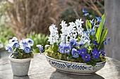 Keramik - Schale und Topf mit Viola cornuta (Hornveilchen), Scilla