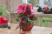 Weihnachtsstrauss aus Hippeastrum (Amaryllis), Rosa (Rosen, Hagebutten)