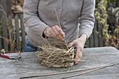 Primel im Gras-Nest