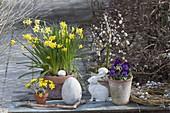 Narcissus 'Tete a Tete' (Narzissen), Salix 'Kilmarnock'