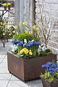 Vorfrühling in Rost-Gefaessen auf der Terrasse