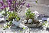 Kleine Fruehlingsdeko mit Anemone nemorosa (Buschwindröschen)
