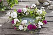 Kranz aus Rosa 'Pauls Himalayan Musk' 'Rose de Resht' (Duftrosen)