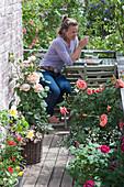 Kleiner Rosenbalkon mit Sitzecke : Rosa (Rosen, Zwergrose), Diascia