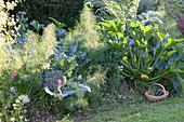 Mischkultur im Huegelbeet : Knollenfenchel (Foeniculum vulgare)