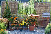 Terrasse mit Sichtschutzelementen aus Weidengeflecht