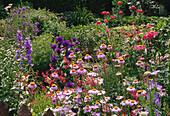 Heuchera, Erigeron, Campanula, Chrysanthemum Purpurglöckchen, Feinstrahl, Glockenblume