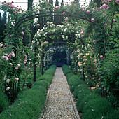 Rosenbogen über einem Kiesweg mit Lavendel