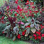 Petunia, Nicotiana, Amaranthus, Sedum, Antirrhinum 7390.2 +
