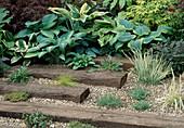 Kiesgarten mit Hosta (Funkien), Gräsern, Thymian (Thymus) und Sedum (Fetthenne), Bahnschwellen im Kies als Trittplatten