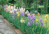 Iris BED at THE MANOR HOUSE, GONALSTON, Nottinghamshire