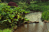 GUNNERA TINCTORIA AND Acer GROWING Beside STREAM LITTLE COOPERS, Hampshire