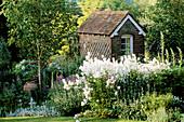 HESPERIS MATRONALIS, STACHYS BYZANTINA, BETULA JACQUEMONTII & Garden BUILDING. THE White HOUSE / Elisabeth WOODHOUSE