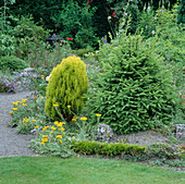 Beet mit Picea (Fichte), Abies compacta (Tanne), Thuja orientalis aurea (Morgenländischer Lebensbaum) und Helichrysum (Strohblume)